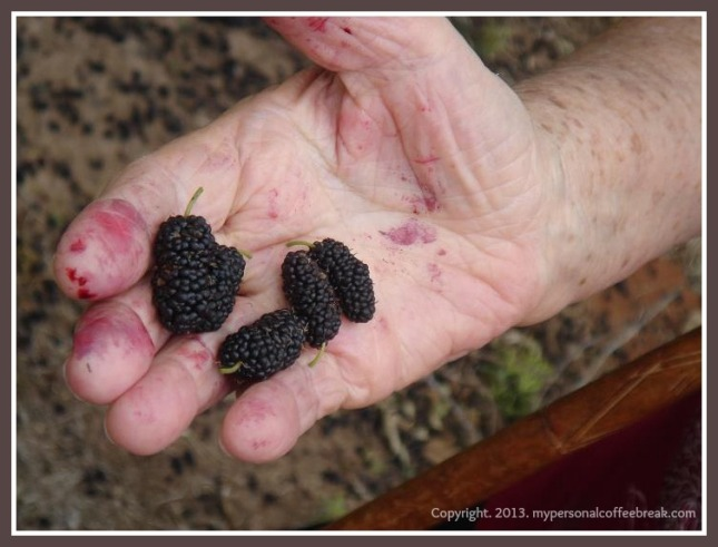 Blackberries_with copyright