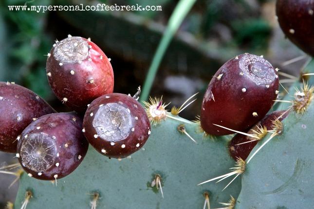 Day8_Cactus