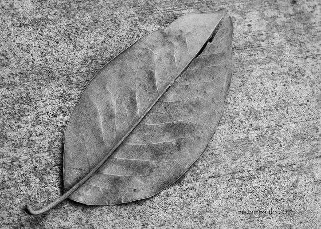 Day293_Magnolia leaf