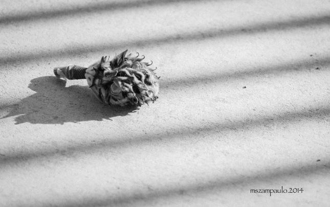 Day346_Dry magnolia blossom